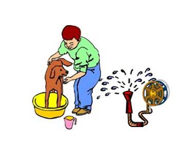 A Dog Getting a Bath