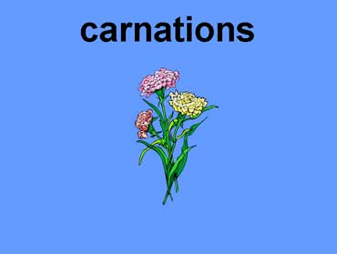 Carnations - Pink Carnations Symbolize a Mother's Love