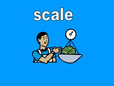 Scale with a Head of Lettuce