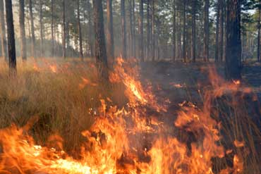 Controlled Burn to Prevent Forest Fires