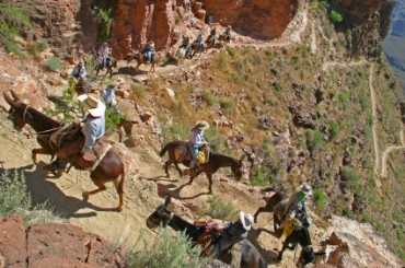 Mules on South Kaibab Trail